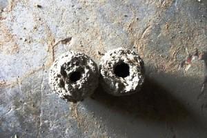 Des objets en forme de canari retrouvés enfouis sous le sol dans un marigot tari