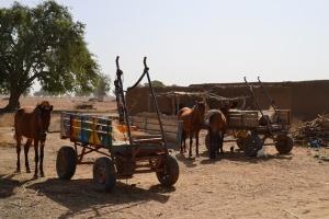 Cherrettes pour chevaux au Mali