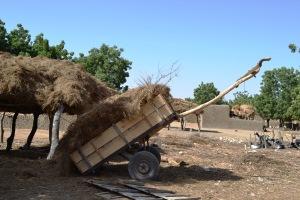 Charrette pour boeufs au Mali