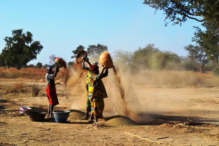 Des femmes maliennes en train de vanner du mil