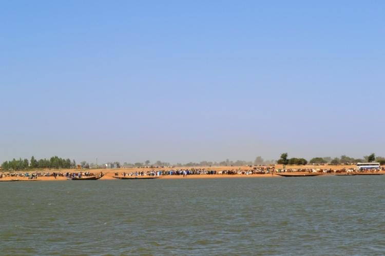 Les peules avec les bœufs sur l'autre rive avant le début de la traversée